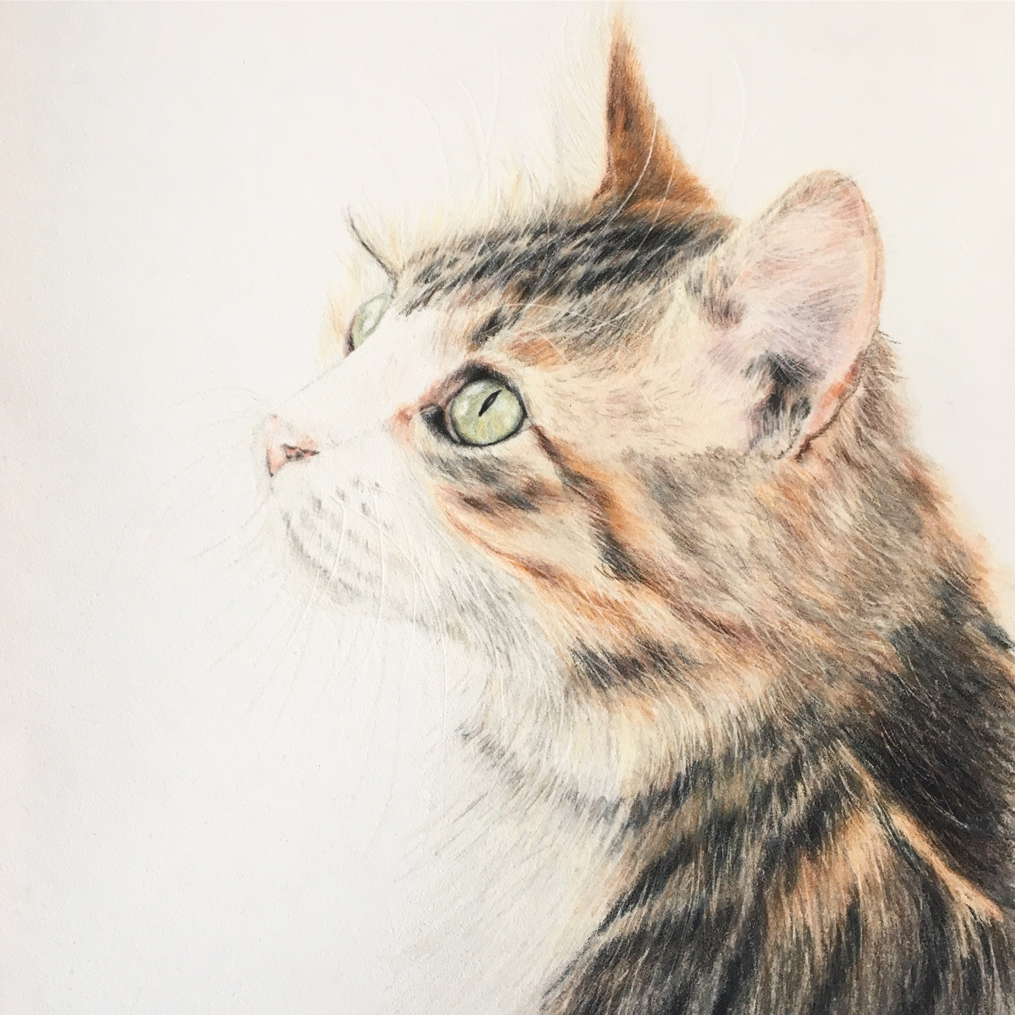 Drawing of tabby cat